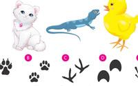 Para imprimir: Relaciona las huellas de las mascotas
